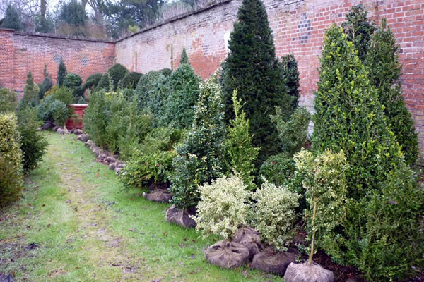 Topiary Plants for Sale