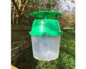 Pheromone Traps for Box Tree Caterpillar
