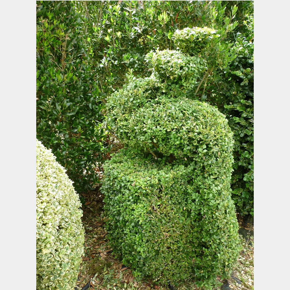 Topiary Birds for Sale