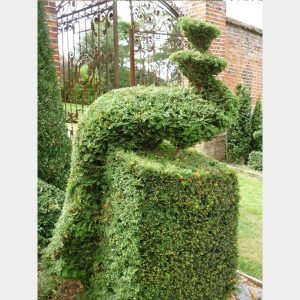 Taxus baccata Topiary Arts Peacock