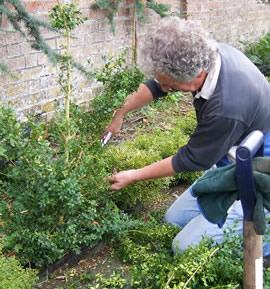 Care Maintenance Topiary Arts