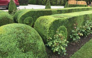 Scroll hedge