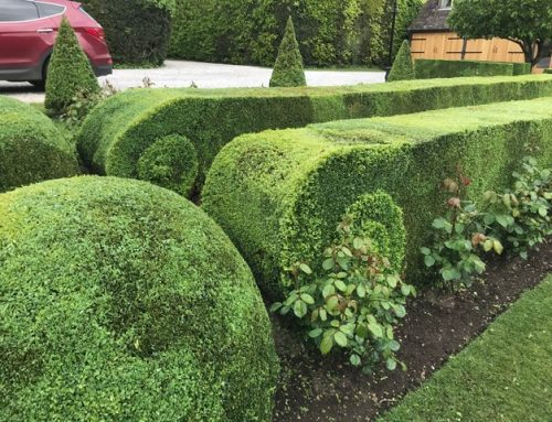Topiary Projects 2020